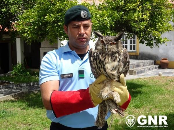Reguengos de Monsaraz – Recuperação de ave de rapina